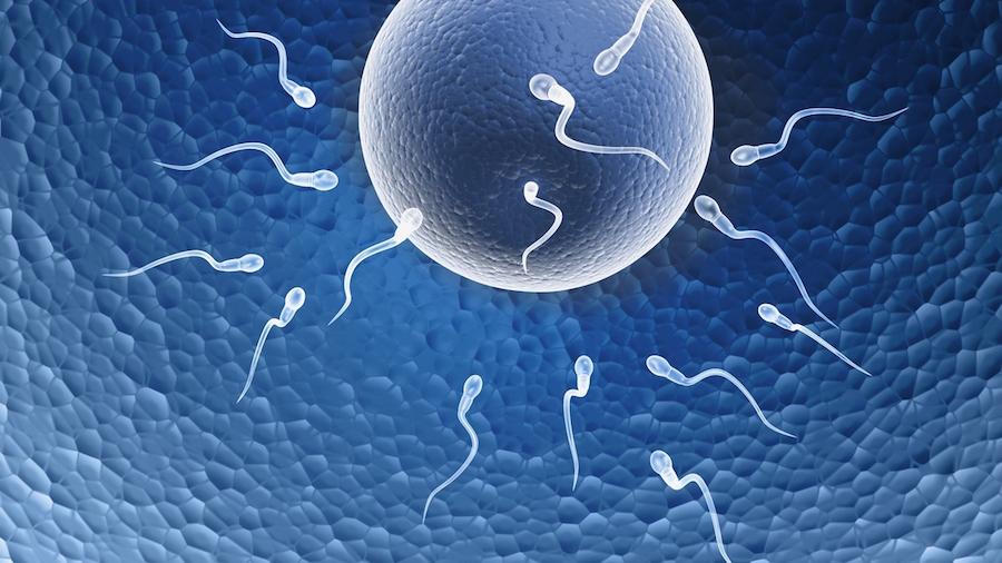 nova istrazivanja o plodnosti