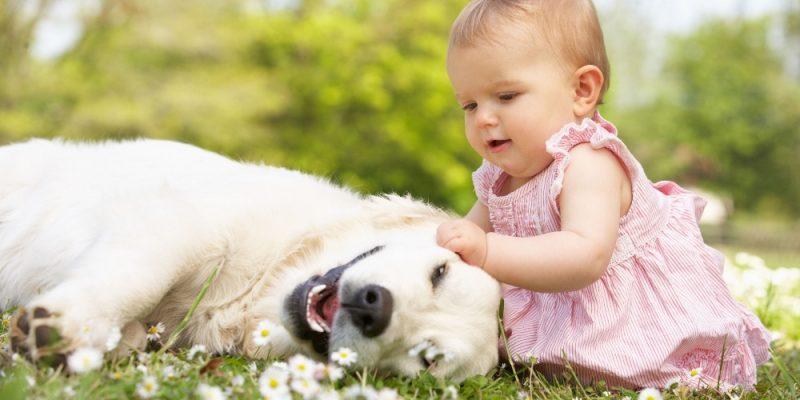 djeca i psi