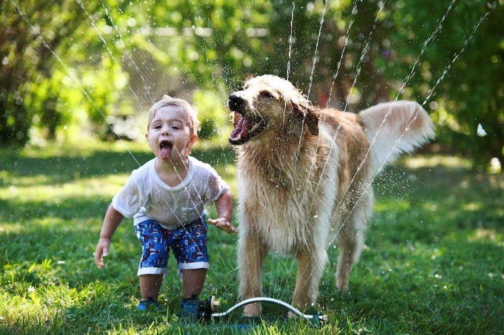 psi i djeca