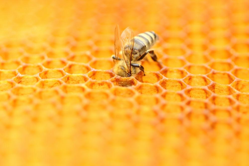 koji je najbolji med